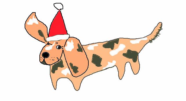gescheckter Dackel mit roter Weihnachtsmütze, ein Ohr aufgerichtet
